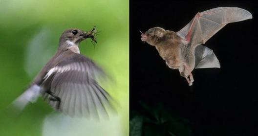 Birds_bats