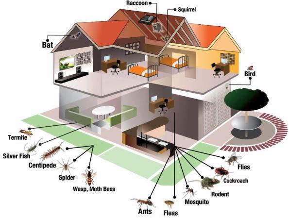 House-Pest-Image