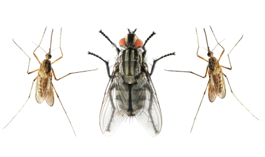 insect_diseases